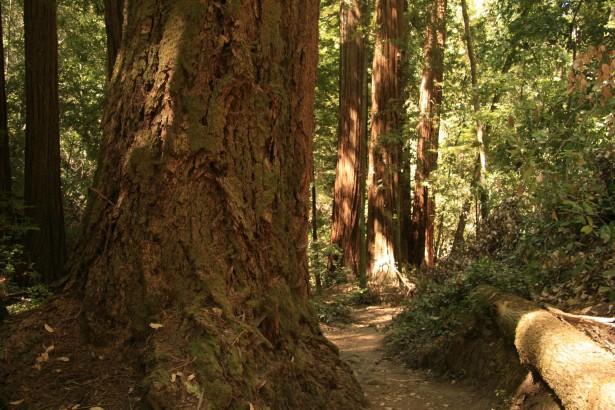 Ipe vs Redwood