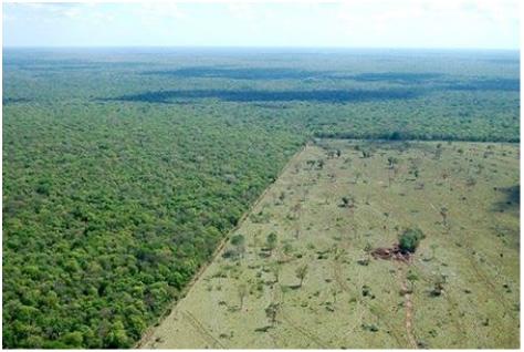Solution to Deforestation